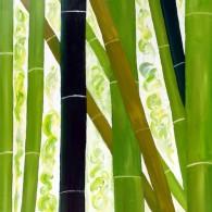 Bamboo III